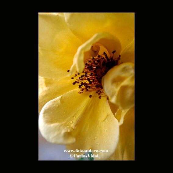 """Serie """"rosas"""" en la galería naturaleza de www.fotoandeco.com"""