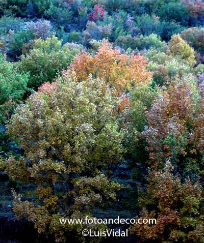 PAISAJE 3018 otoño face 01